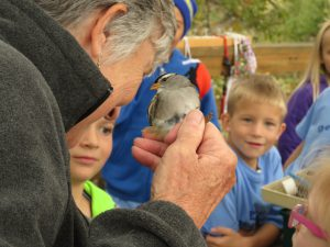 Second and third grade students watch an adult White-crowned Sparrow being banded. Photo by Tom Martinez.