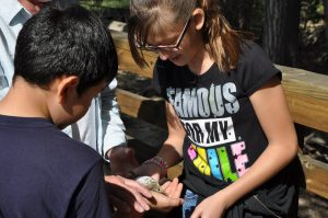Fifth grade students release a Hermit Thrush. Photo by Peggy Watson.