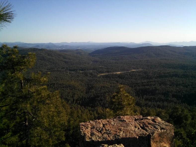 Survey site on the Gila National Forest. Photo by Jennifer Blakesley.