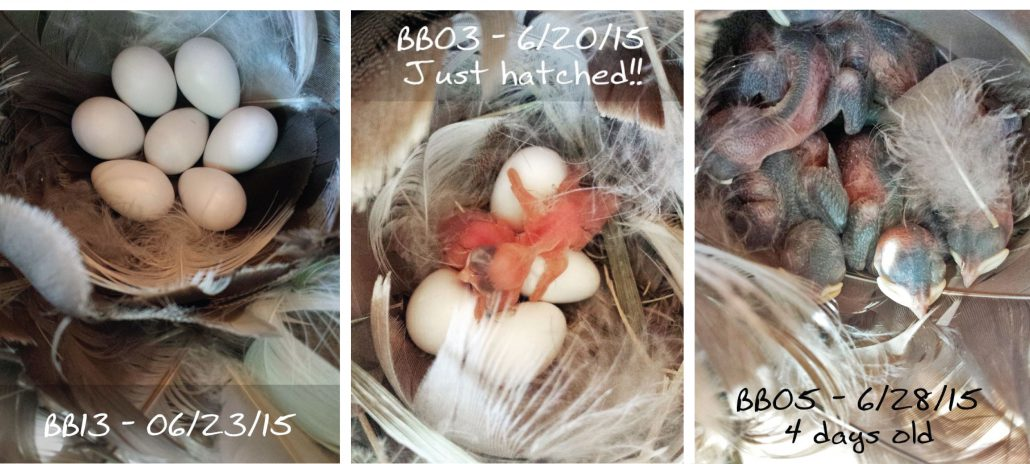 Nestbox Photos Set 2