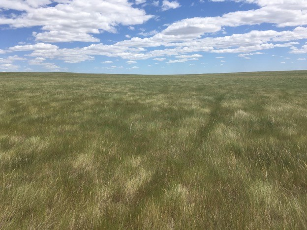 Mixed-grass prairie landscape at Bird Conservancy's study site in western North Dakota. Photo by Kelsey Bell.