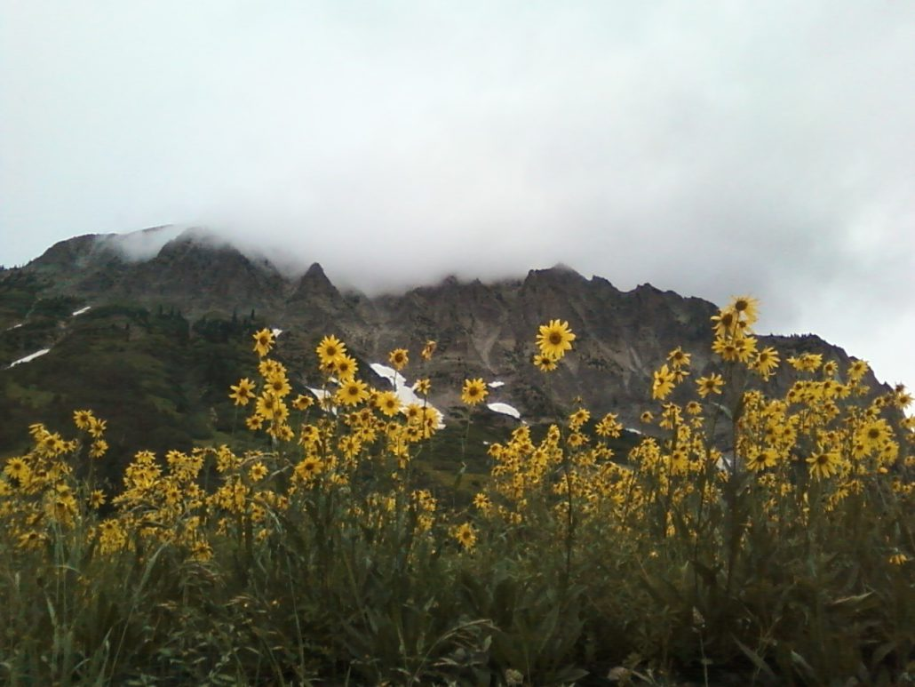 Sunflowers below Gothic Mountain