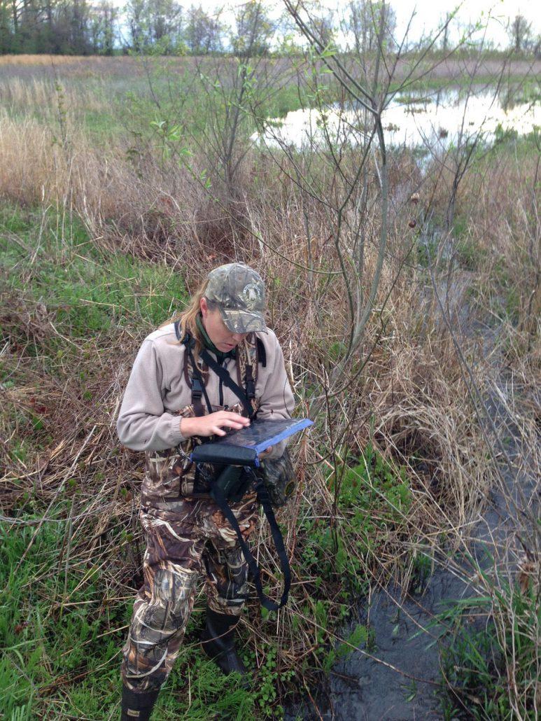 Dana Ripper, Executive Director Missouri River Bird Observatory doing a marsh bird survey