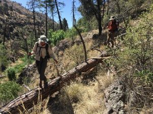 Accessing our survey sites can be difficult and requires long hikes on- and off-trail, so technicians must be in excellent physical fitness.