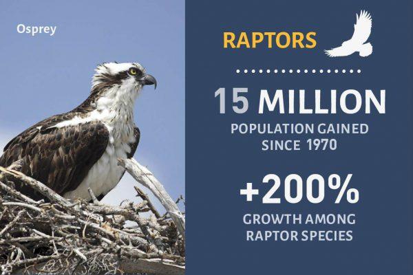 Raptor Success