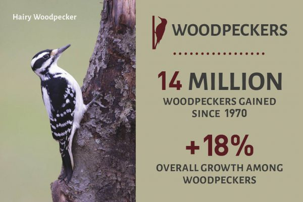 Woodpeckers Success