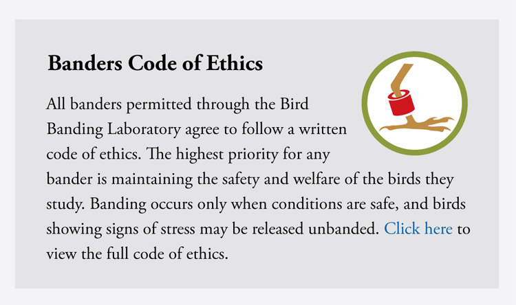 Bander's Code of Ethics--All banders permitted through the Bird Banding Laboratory agree to follow a written code of ethics. The highest priority for any bander is maintaining the safety and welfare of the birds they study. Banding occurs only when conditions are safe, and birds showing signs of stress may be released unbanded. View the full code of ethics here.