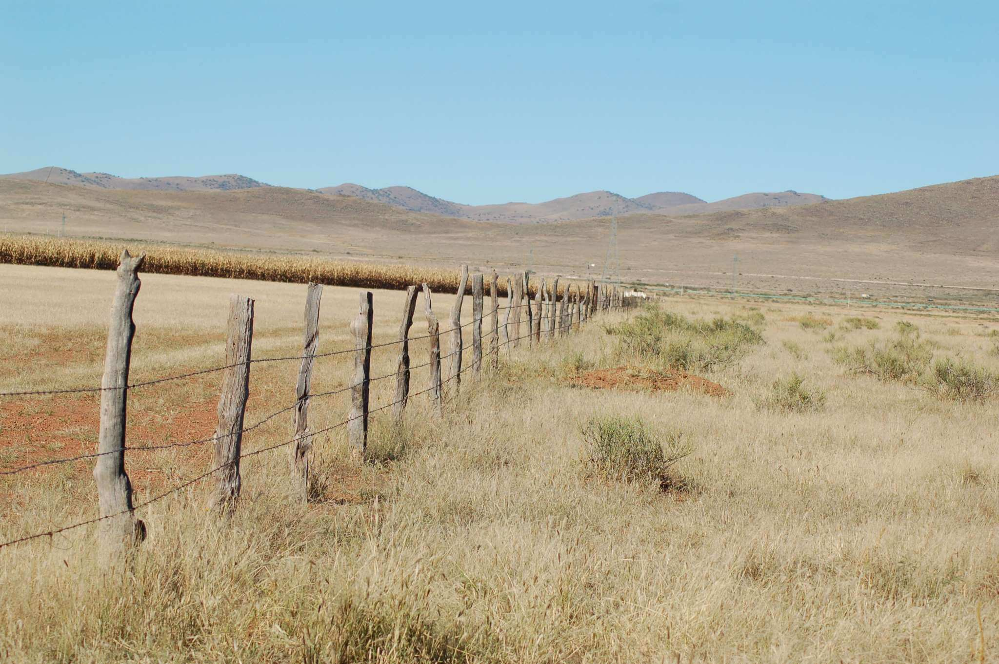 Close-up of cropland conversion; the right side of the fence line shows the high quality grassland that was lost on the left side of the fence. Photo © Greg Levandoski