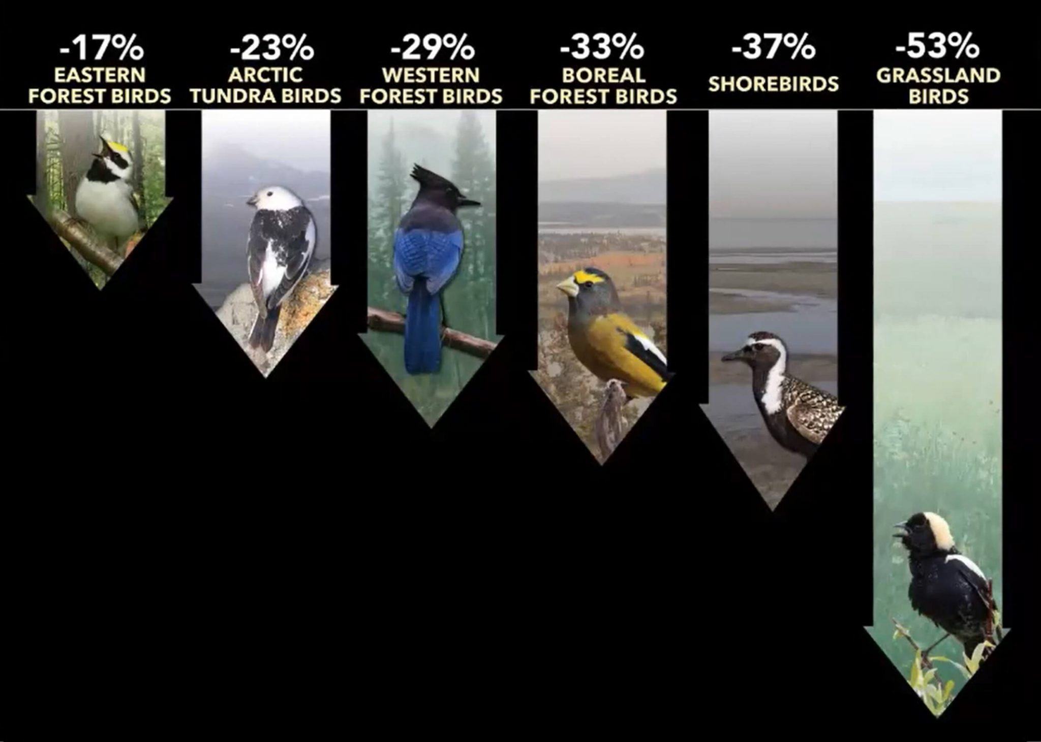 This graph depicts steep declines in bird populations across all guilds and habitat types