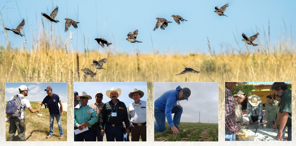 The Summit brings together stakeholders from across many sectors and geographical areas to save grasslands by working together