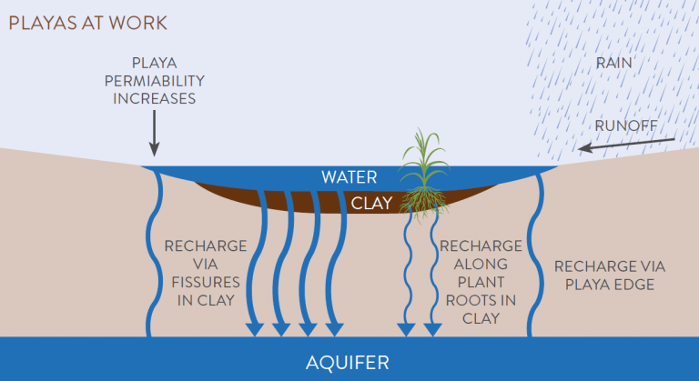 This diagram depicts how playa water filters down into the earth to 'recharge' the aquifer beneath, replenishing groundwater that is critical for people and agriculture. Diagram courtesy of Playa Lake Joint Venture.