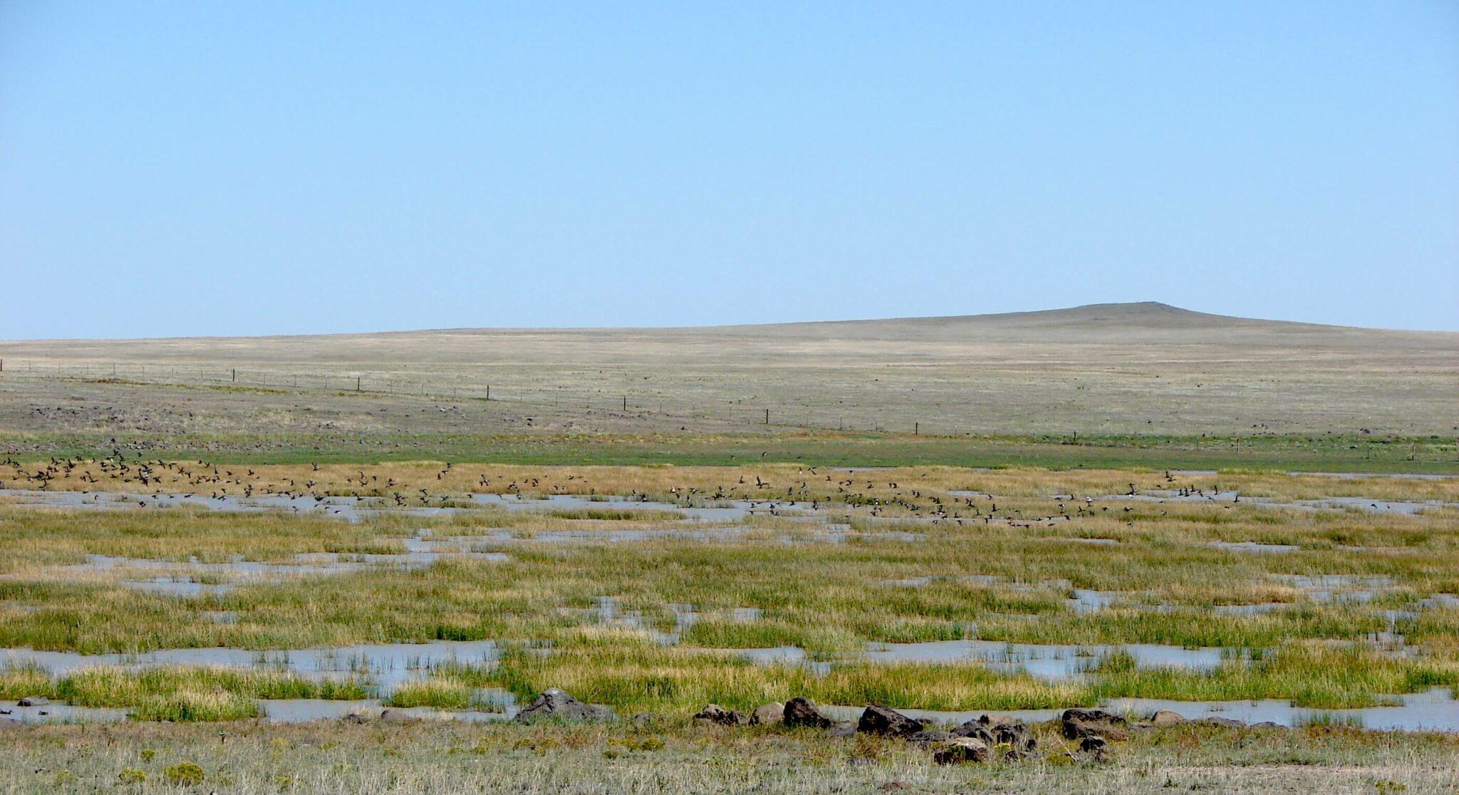 Rock Lake Playa at Kiowa National Grassland in Harding County, NM. Photo: A. Safranek USFS