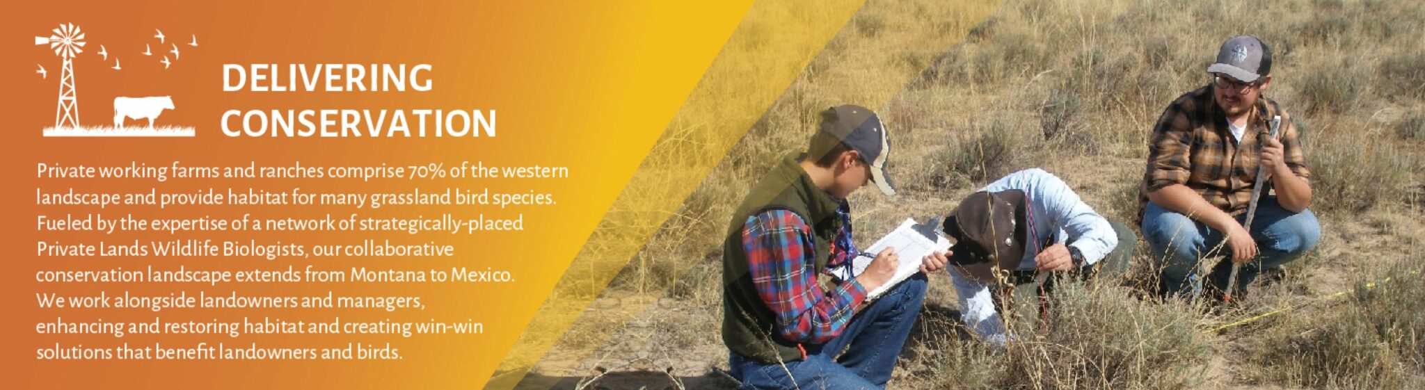 Delivering conservation! Private working farms and ranches comprise 70% of the western landscape and provide habitat for many grassland bird species. Fueled by the expertise of a network of strategically-placed Private Lands Wildlife Biologists, our collaborative conservation landscape extends from Montana to Mexico. We work alongside landowners and managers, enhancing and restoring habitat and creating win-win solutions that benefit landowners and birds.